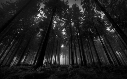 dark-woods-wallpaper-hd-1